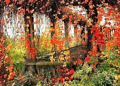 Autumn Vines, Weinberg, Germany