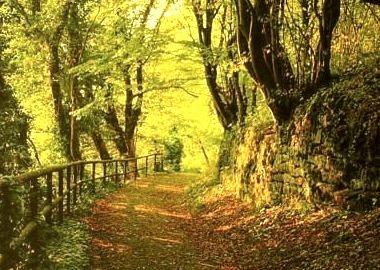 Forest Path, Cork County, Ireland