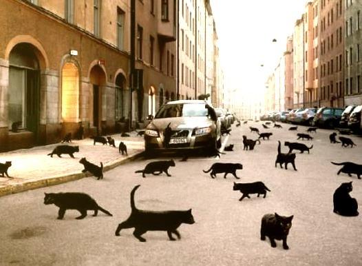 Black Cat Invasion, Oslo, Norway