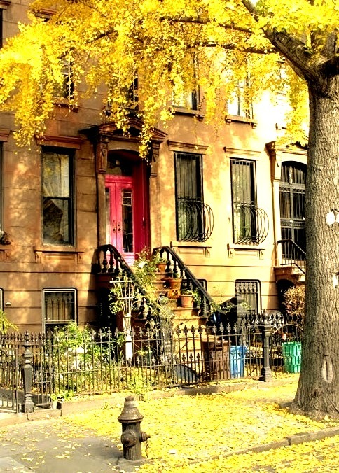 Autumn, Brooklyn, New York