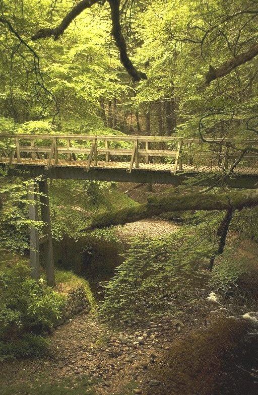 Forest  Bridge, Cawdor Castle, Scotland