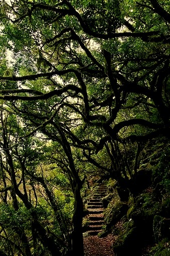 Laurissilva Forest path in Madeira Island, Portugal