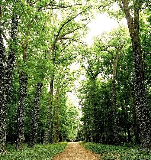 Arboretum in the park at Kornik Castle, Poland