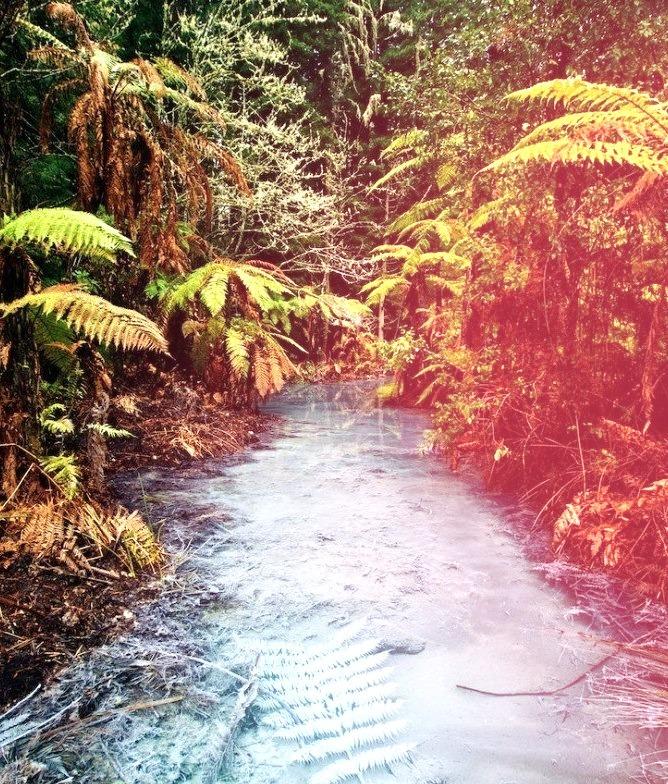 Clear thermal stream in Whakarewarewa Redwoods Forest, Rotorua / New Zealand