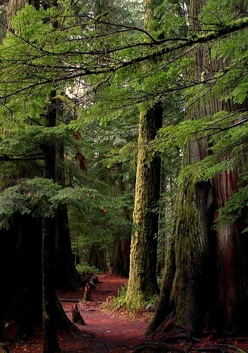 MacMillan Provincial Park in British Columbia / Canada